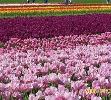 Flowers by bhavrisha