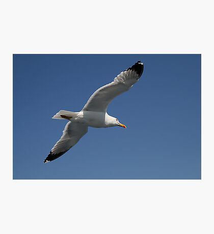 Greek Seagull Photographic Print