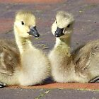 Gosling Siblings by Mark Wilson