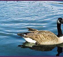 canadiaqn goose by David Stembaugh
