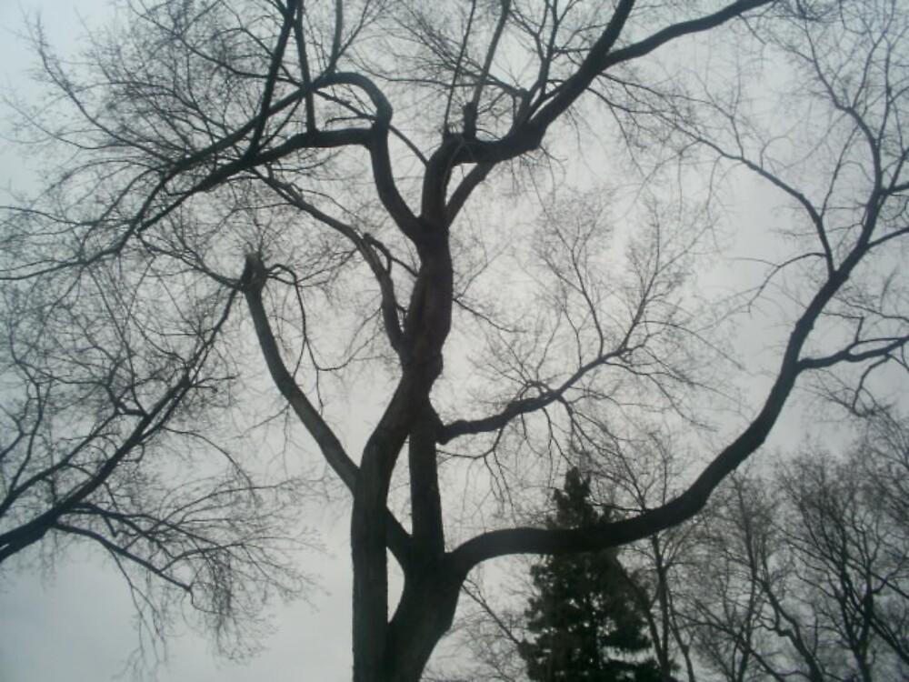 more trees by oilersfan11