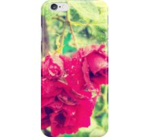 Wet red roses 2 iPhone Case/Skin