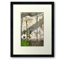 Arum Lilly 3 - Death & Life Framed Print