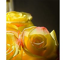Yellow roses 2 Photographic Print