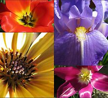 Up Close and Personal - Flowering Bulbs Collage by SunriseRose
