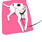 Spotty Dog by WoolleyWorld