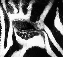 eye of the zebra by gashwen