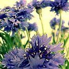 Blue by James McKenzie