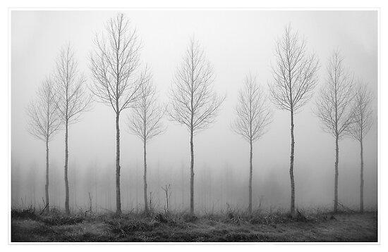 Through the fog by cherryannette