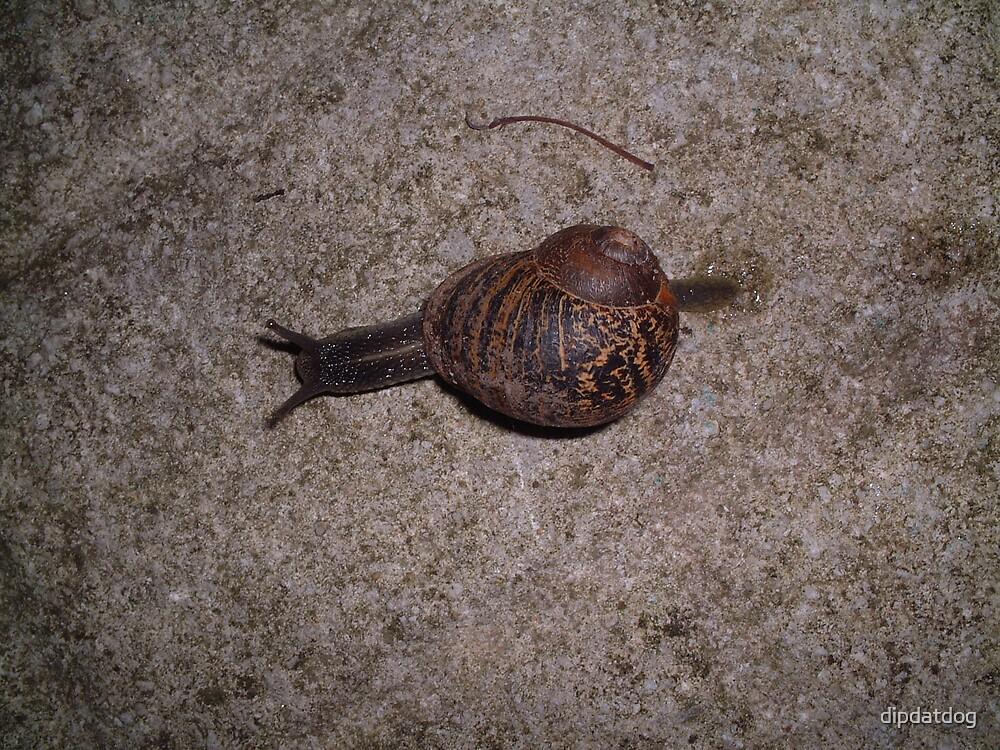 A Snails Pace by dipdatdog