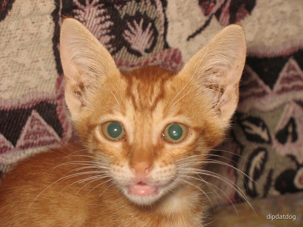 An Egyption kitten by dipdatdog