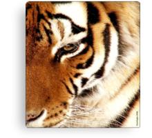 Tiger! Tiger! Burning Bright! Canvas Print
