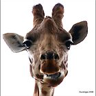 Giraffe by Durotriges