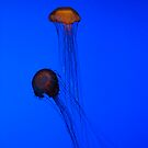 Jelly FIsh 1 by TJ Alexander