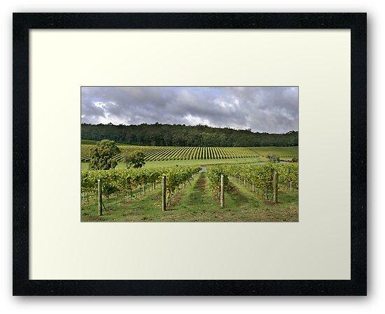 Pemberton Vineyard - Western Australia  by EOS20