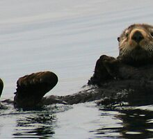Sea Otter by loriann