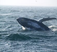 Humpback Breach by LizAndino