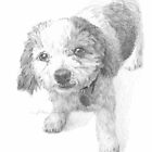 Bichon mix drawing by Mike Theuer