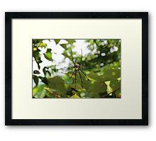 The Exotic Spider II - Hong Kong. Framed Print