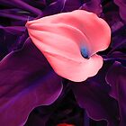 Flower in Pink, Purple and Blue by Nicholas de Boos
