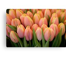 Tulips and more tulips Canvas Print