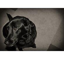Doggy Photographic Print