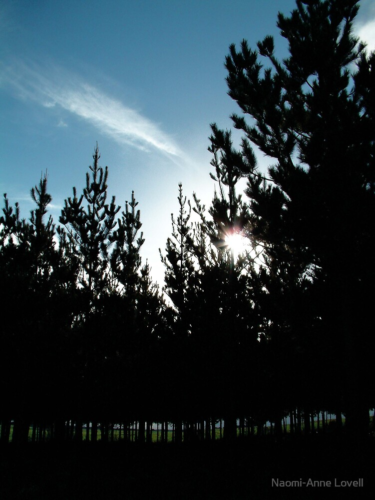 pine trees by Naomi-Anne Lovell