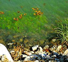 algae by sabrosa1068