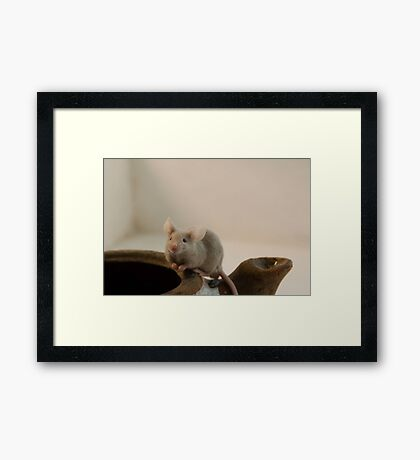 Hello there, got cheese? Framed Print