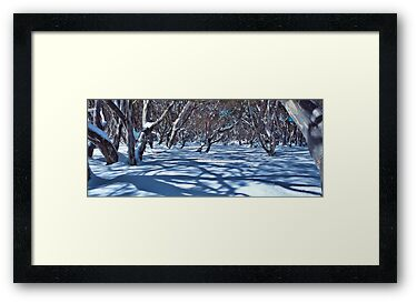 Snow Gums and Shadows by John Barratt