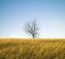Lonely tree by cannedmoods