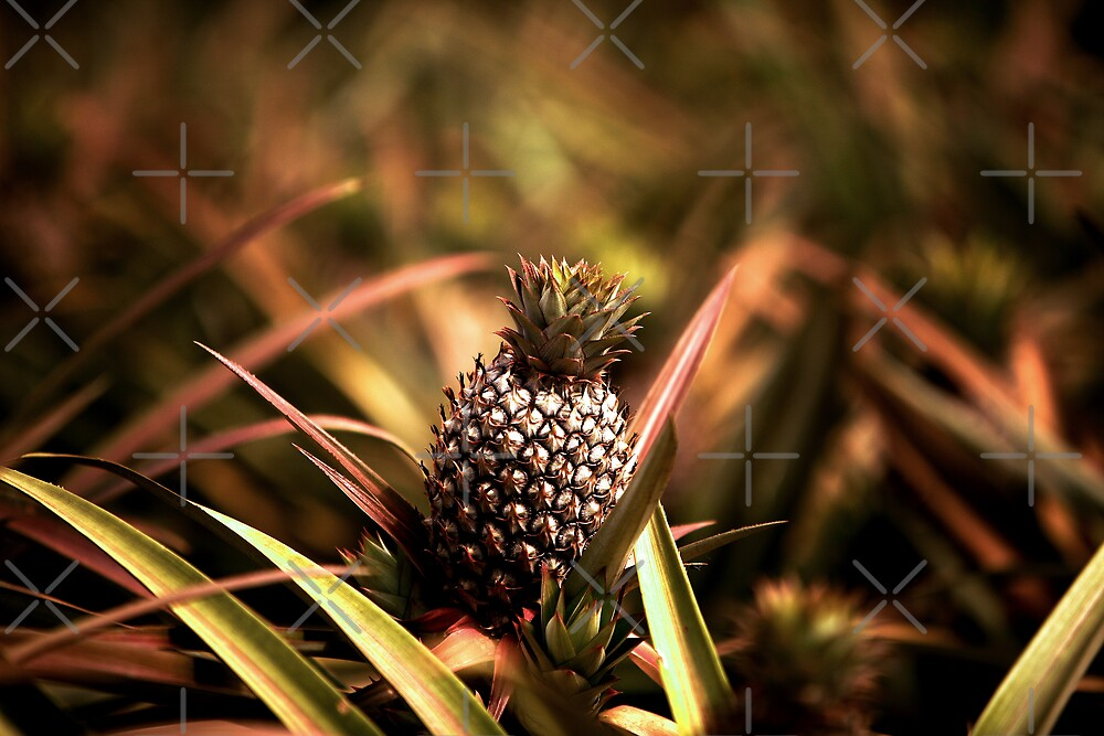 Lone Pineapple by Ben Pacificar