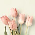 Soft Blush Tulips by Caroline Mint