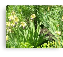 flower patches in the ground Canvas Print