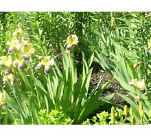flower patches in the ground Photographic Print