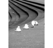 Sea Gulls & Steps Photographic Print
