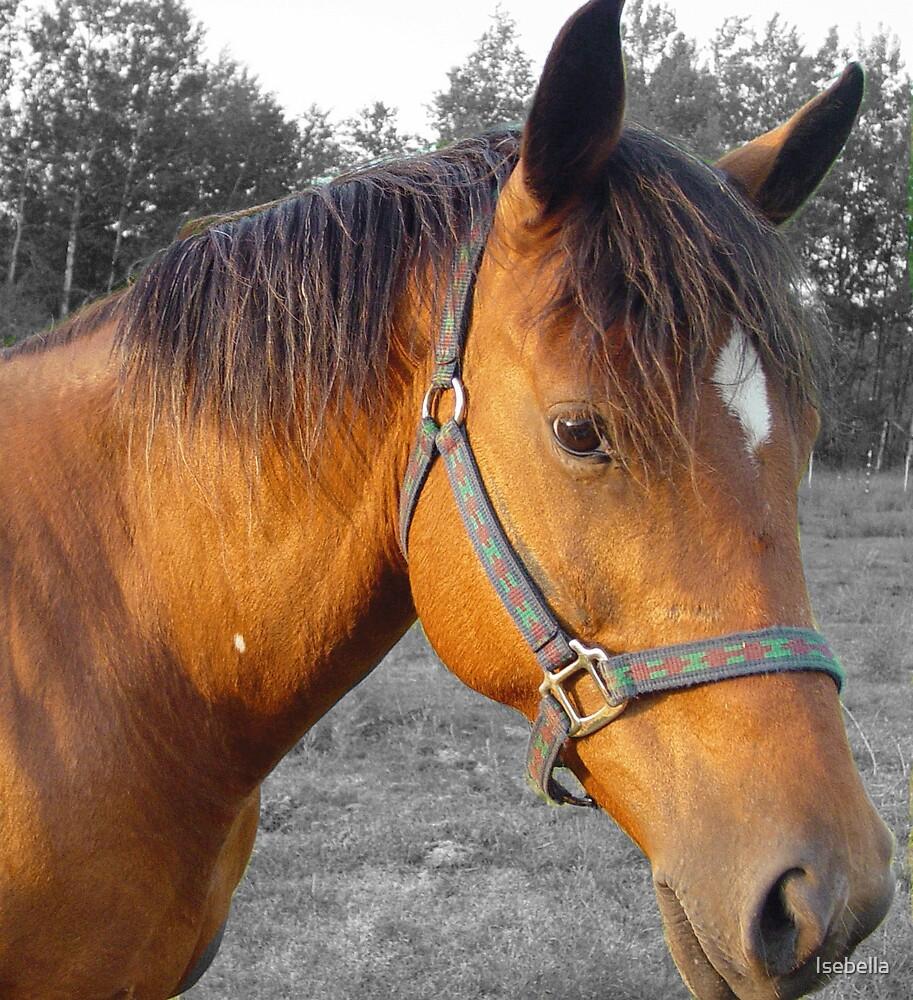 Horse by Isebella