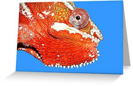 Chameleon by sonia