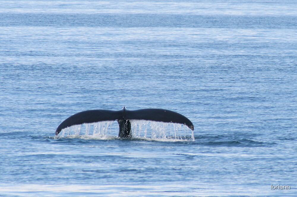 A whale's Tail by loriann