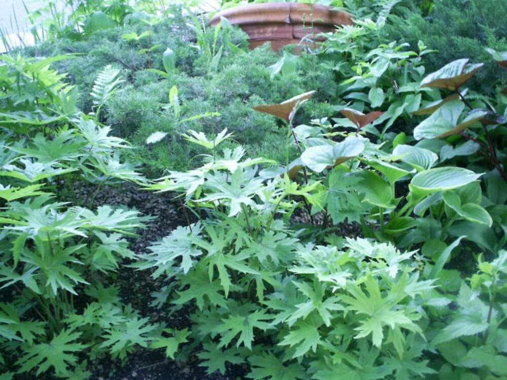 green plants  by oilersfan11