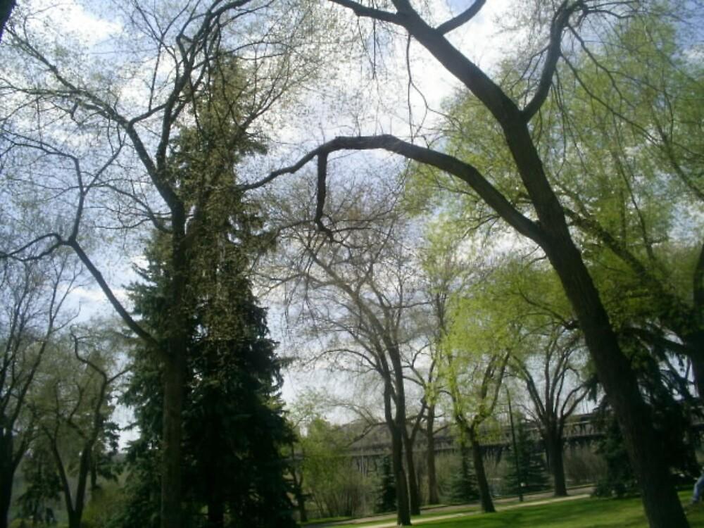 distant trees in park by oilersfan11