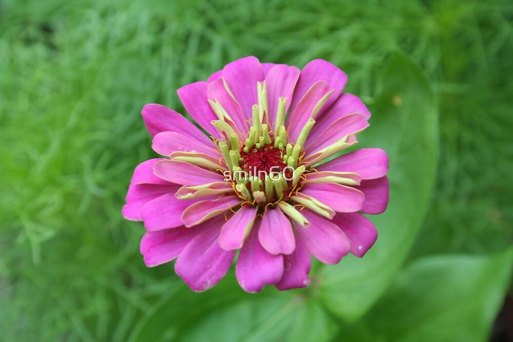 Purple passion by Rachel Lewter