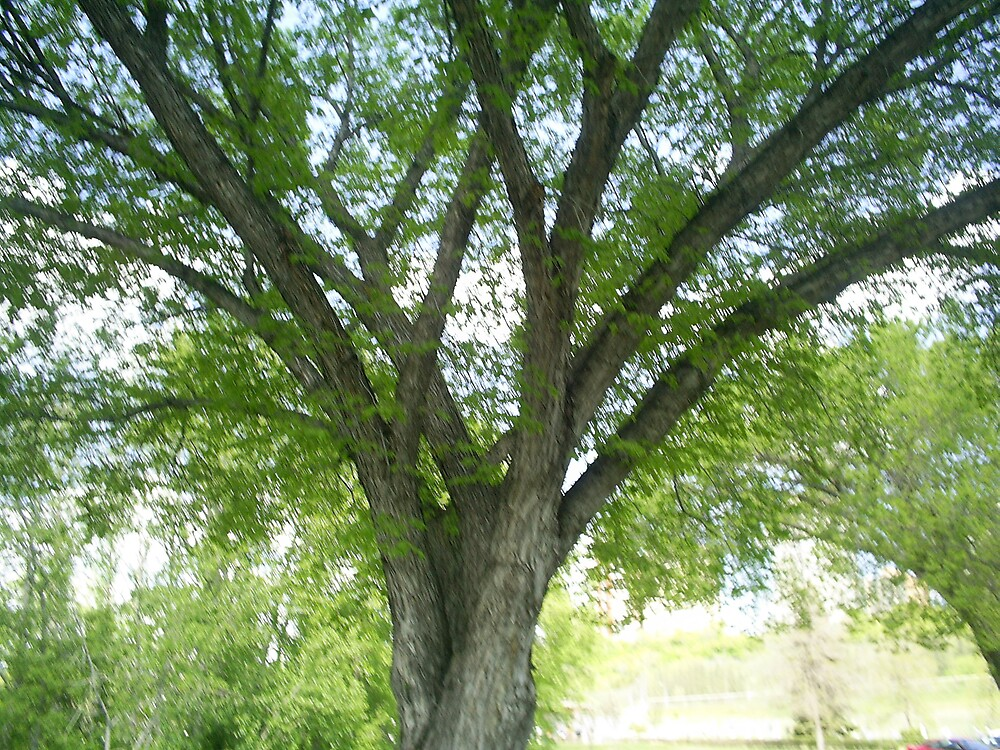 branched out tree branches by oilersfan11