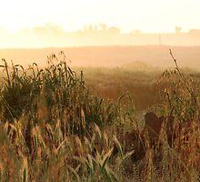 Early Morning Mist-Monterosi, Italy by Deborah Downes