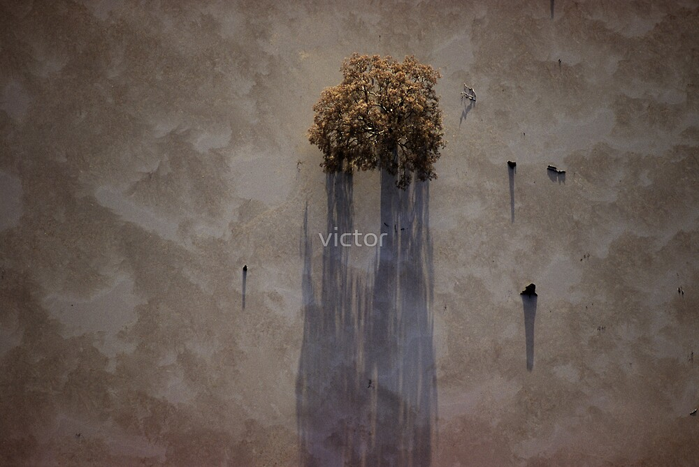 wetland tree by victor