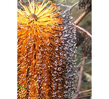 bottle brush with droplets Photographic Print