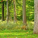 The Woods Out Back ~ Lake Ontario by artwhiz47