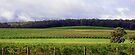 Pemberton Vineyard Panorama  by EOS20
