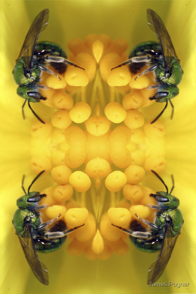 Four Bees Are Better Than One by James Poyner