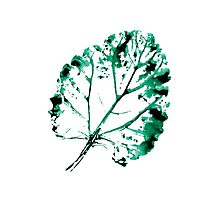 Abstract hand drawn watercolor leaf. by smotrivnebo
